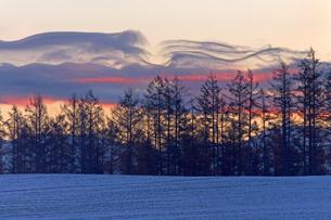 雪の積もる日の出前の美瑛の写真素材 [FYI03356913]
