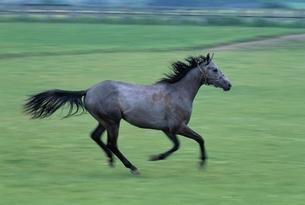 馬の写真素材 [FYI03357229]