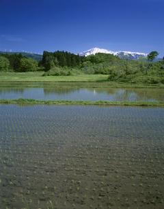 水田と鳥海山の写真素材 [FYI03357356]