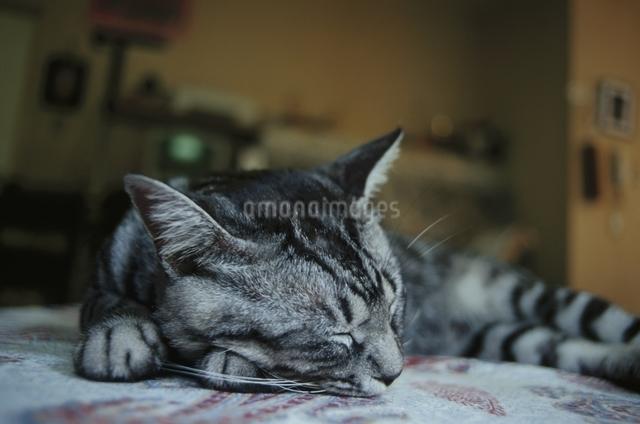 ネコの写真素材 [FYI03358462]