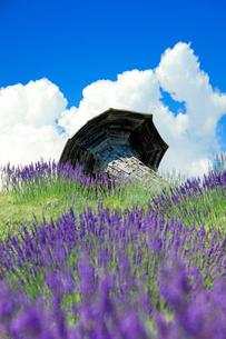 信州国際音楽村のラベンダー畑とホルンのオブジェの写真素材 [FYI03359387]