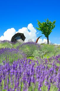 信州国際音楽村のラベンダー畑と木立とホルンのオブジェの写真素材 [FYI03359388]