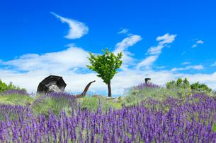 信州国際音楽村のラベンダー畑と木立とホルンのオブジェとすじ雲の写真素材 [FYI03359676]