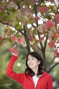 木の葉にふれる女性の写真素材 [FYI03361631]