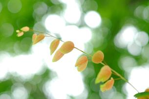 こもれびを浴びる葉の写真素材 [FYI03361696]