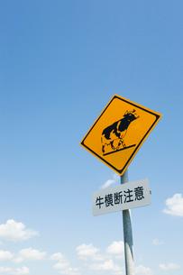 牛の標識と青空の写真素材 [FYI03361768]