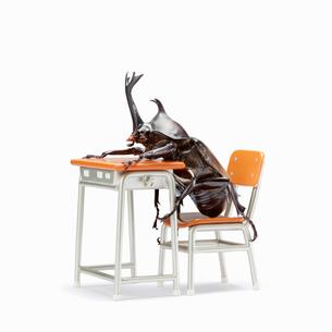 席につくカブトムシの写真素材 [FYI03361824]