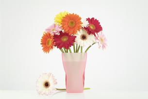 花瓶に活けたガーベラの写真素材 [FYI03361864]