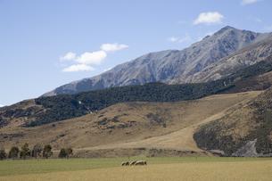 羊のいる風景の写真素材 [FYI03361926]