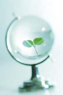 クリスタルの地球儀に浮かぶ緑の葉の写真素材 [FYI03361940]