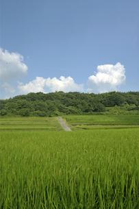稲穂実る里山風景の写真素材 [FYI03362957]