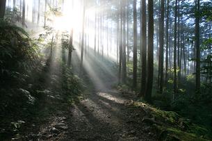 光芒が差し込む熊野古道の写真素材 [FYI03363440]