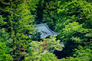 新緑の日光東照宮御旅所の写真素材 [FYI03363818]