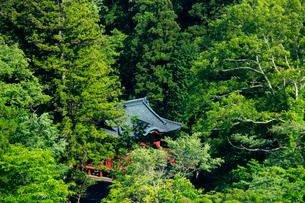 新緑の日光東照宮御旅所の写真素材 [FYI03363821]