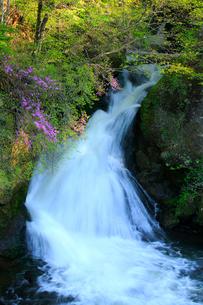 トウゴクミツバツツジと竜頭ノ滝の写真素材 [FYI03363892]