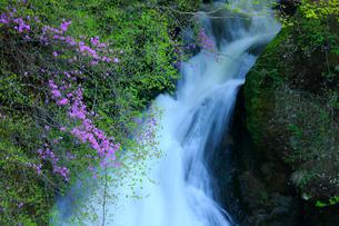 トウゴクミツバツツジと竜頭ノ滝の写真素材 [FYI03363893]