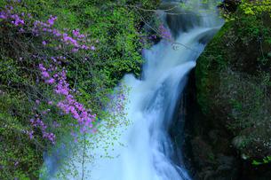 トウゴクミツバツツジと竜頭ノ滝の写真素材 [FYI03363894]