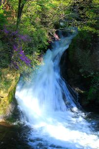 トウゴクミツバツツジと竜頭ノ滝の写真素材 [FYI03363895]