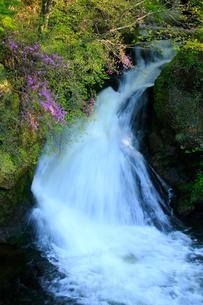 トウゴクミツバツツジと竜頭ノ滝の写真素材 [FYI03363896]