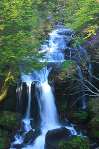 トウゴクミツバツツジと竜頭ノ滝の写真素材 [FYI03363897]