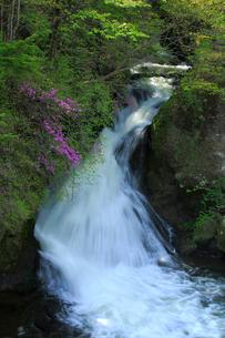 トウゴクミツバツツジと竜頭ノ滝の写真素材 [FYI03363934]