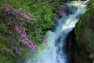 トウゴクミツバツツジと竜頭ノ滝の写真素材 [FYI03363938]
