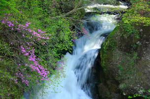 トウゴクミツバツツジと竜頭ノ滝の写真素材 [FYI03363943]