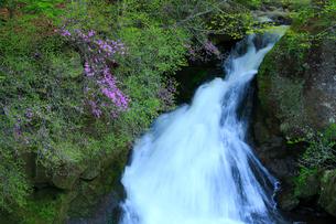 トウゴクミツバツツジと竜頭ノ滝の写真素材 [FYI03363969]