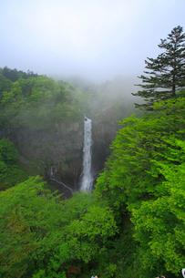 奥日光の新緑と華厳ノ滝の写真素材 [FYI03363990]