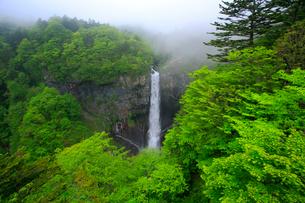 奥日光の新緑と華厳ノ滝の写真素材 [FYI03363997]