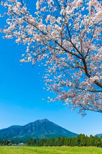 夷守岳を望む桜の写真素材 [FYI03364581]