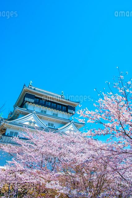小倉城の桜の写真素材 [FYI03364587]