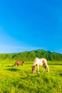 阿蘇草千里ヶ浜の馬の写真素材 [FYI03364630]