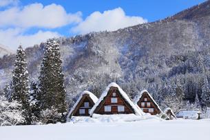 冬の白川郷 合掌造り集落の写真素材 [FYI03364706]