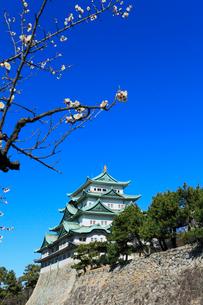 名古屋城天守閣とウメの写真素材 [FYI03364802]