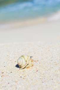 渚のオカヤドカリの写真素材 [FYI03364864]