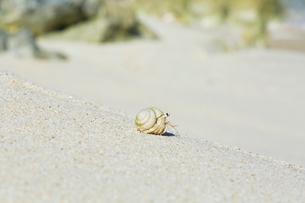 渚のオカヤドカリの写真素材 [FYI03364868]