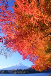 富士山と紅葉と河口湖の写真素材 [FYI03365055]