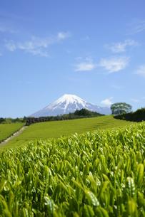 新茶と富士山と青空の写真素材 [FYI03365074]
