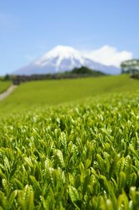 新茶と富士山と青空の写真素材 [FYI03365084]