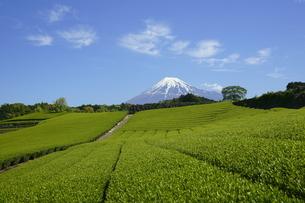 茶畑と富士山と青空と雲の写真素材 [FYI03365091]