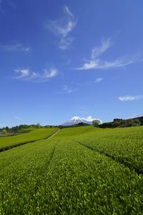 茶畑と富士山と青空と雲の写真素材 [FYI03365093]