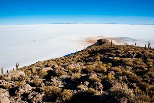 ウユニ塩湖のサボテン島 インカワシの写真素材 [FYI03365169]