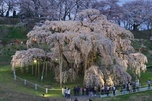 三春の滝桜、夜桜の写真素材 [FYI03365263]