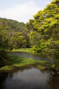 沖縄 やんばるの沼地の写真素材 [FYI03365384]