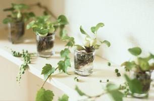 棚の上の植物の写真素材 [FYI03365937]