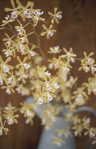 水差しに入った花の写真素材 [FYI03367405]