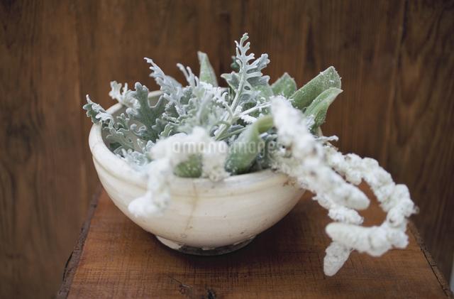 花器に活けたラムズテールの写真素材 [FYI03367414]