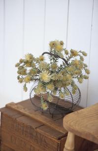 椅子と植物の写真素材 [FYI03367439]
