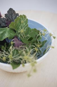 テーブルの上の植物の写真素材 [FYI03367456]